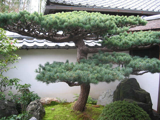 Japan kyoto daitoku ji zen buddhist temple daisen in zen for Zen garden trees