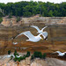 Seagulls at the Pictured Rocks