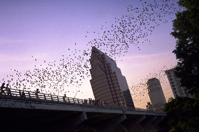Things to do in Austin, Texas | Watch the South Congress Bat Colony fly out on summer nights in Austin, Texas
