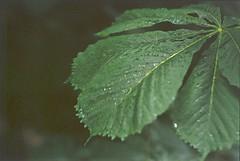 Leaf, 2000