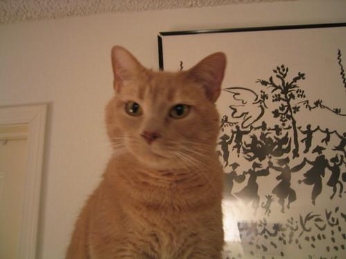 cat IMG_0008