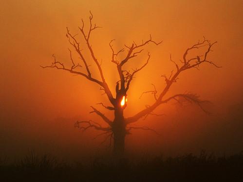 uk red england orange mist tree heron topf25 topv111 1025fav sunrise dead dawn topf50 topv555 topv333 catchycolours topc50 deadtree slough berkshire kevday langley langleypark mc01 topmc01 milked omot photology chtk