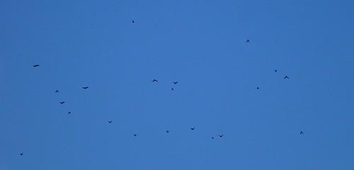 types of birds