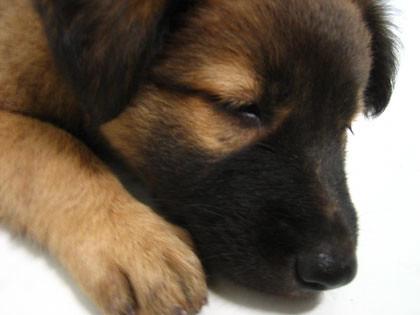sleepy koda