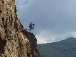 Kings Canyon - Life clings