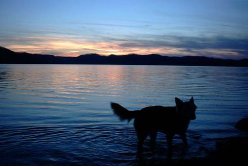 sunset lake dogs water caverunlake