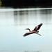 Tampico, Garza en la Laguna del Carpintero. por helicongus