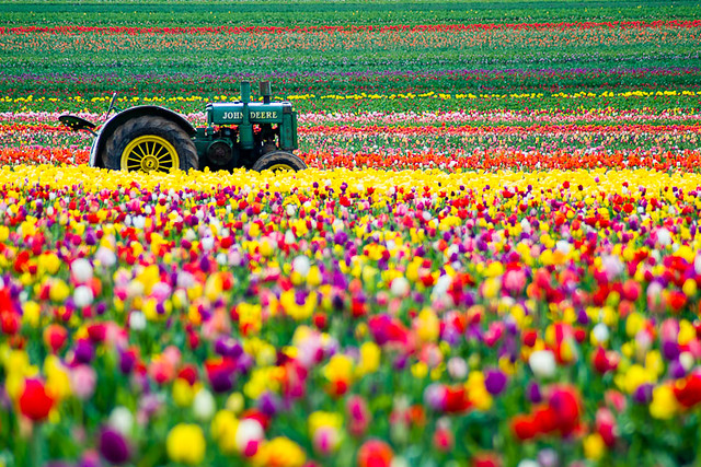 Tulip season 8 by benjamin postlewait for What season are tulips