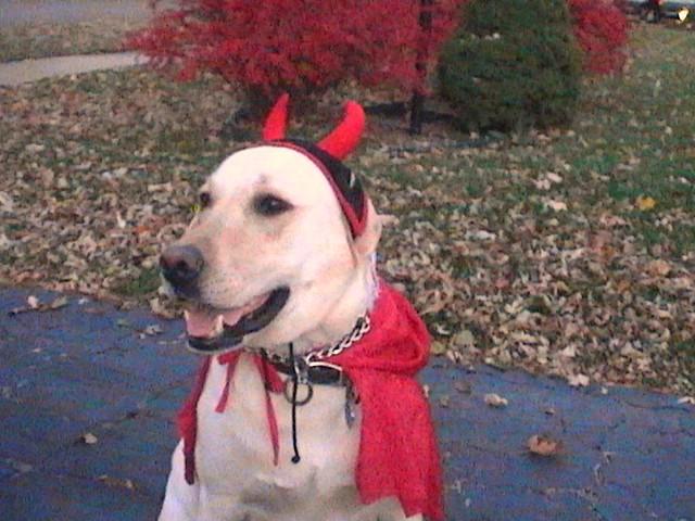 Pictures Of Halloween Costume