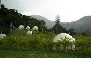 bolas hamster gigantes