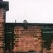 1996_11_QueenstownBattersea