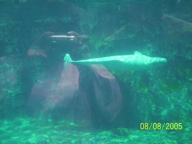 Beluga Whale At Mystic Aquarium Flickr Photo Sharing