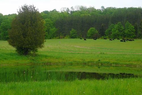 tree green water spring pond audubonsociety springtime verdure birdwalk pondhillfarm petoskeyregionalaudubonsociety