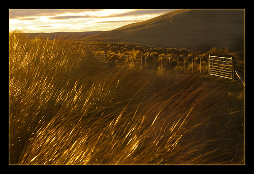 newzealand grass landscape evening bravo searchthebest nz otago tussock helluva magicdonkey otagonz artlibre superaplus aplusphoto flickrelite utata:project=uplandscape superjill ©borealnz