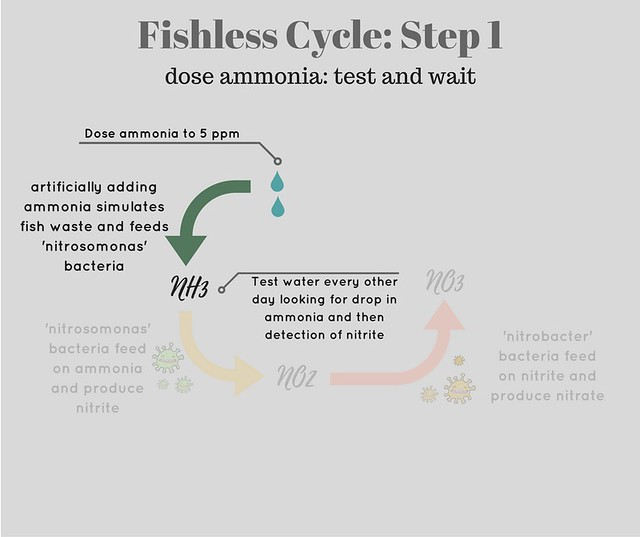diagram showing step one of fishless cycle - dosing ammonia