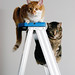 Cats still love ladders