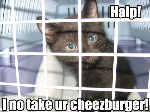 lolcat_cage