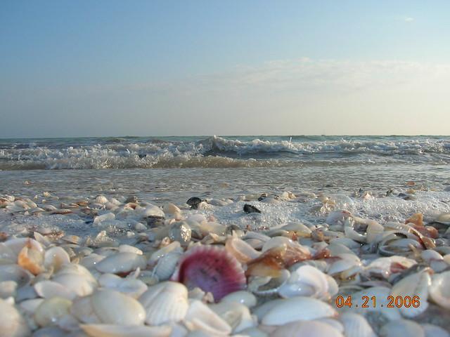 Sanibel Island Fl: Sanibel Island Florida Sea Shells Beach