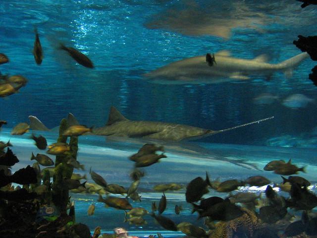 Ripley 39 S Aquarium Gatlinburg Flickr Photo Sharing