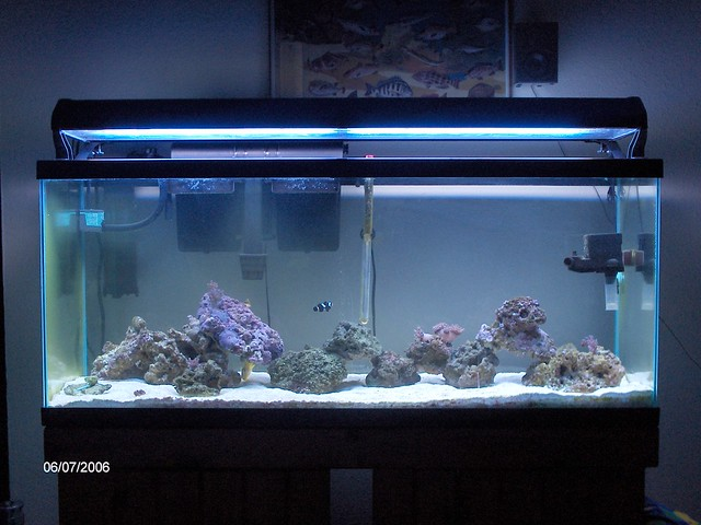 Saltwater Aquarium 55 Gallon 55 Gallon Saltwater