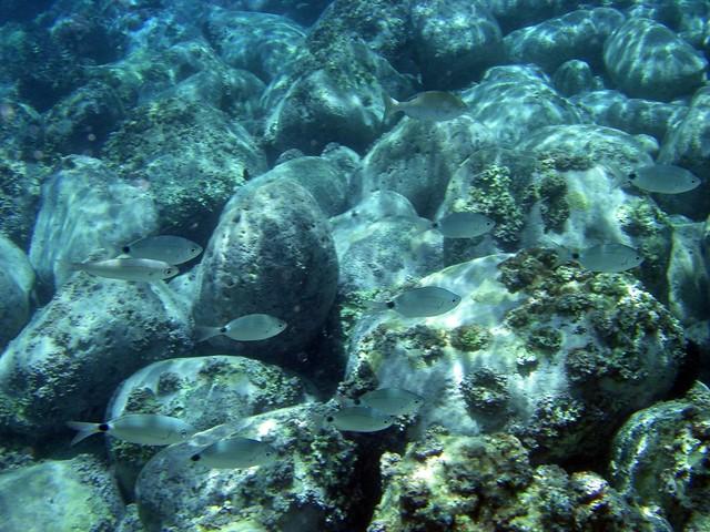 Canary Islands Fish