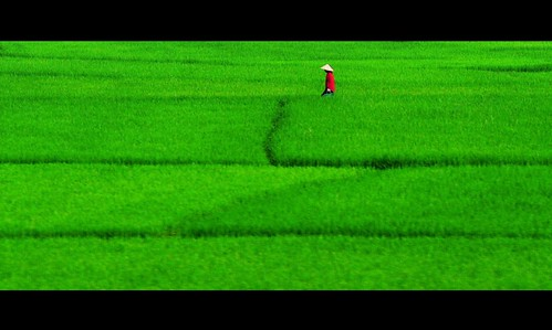 Red lady in a paddy field