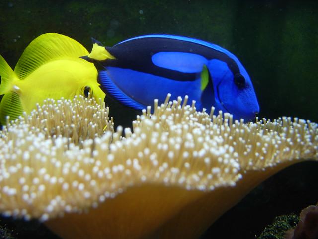 Finding nemo fish tank flickr photo sharing for Finding nemo fish tank