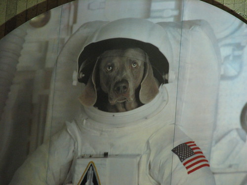 dog in space suit - photo #11