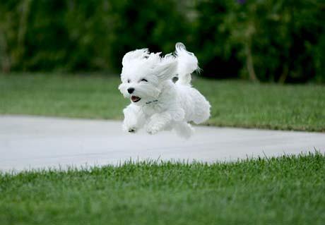very-cute-puppy_04