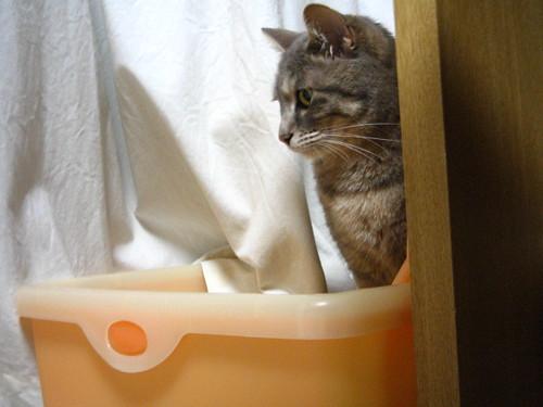 猫のトイレ選びも大変です