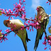 Spring Parrots by NatashaP