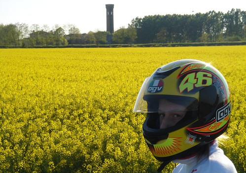 Yellow helmet on yellow flowers