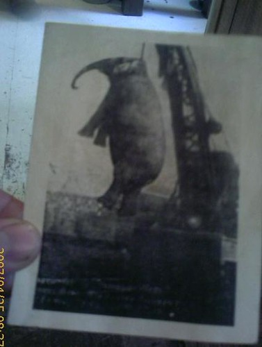 Picture of Erwin's elephant execution