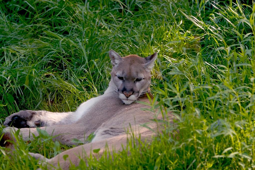 Plan Cul Cougar Lorient 56100 Avec Suceuse Cougar