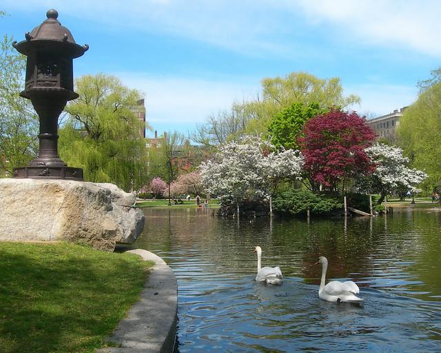 Swans In The Boston Public Garden Flickr Photo Sharing
