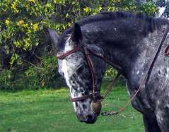 Mi caballo / My horse