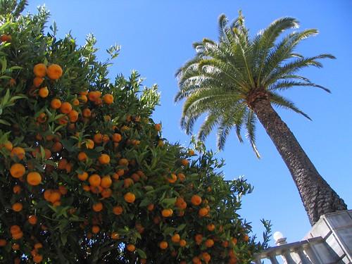 Tangerines & Palm