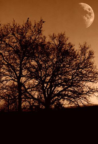 morning trees light sunset sky cloud sun moon black tree nature silhouette night clouds sunrise dark landscape nuvole cloudy alba cielo monocromatic sole notte notturno mattino sunrising tarocco davdenic daviddenicolò daviddenicolo