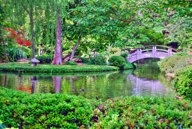 Enveloped in green fort worth botanical japanese garden for Japanese botanical garden