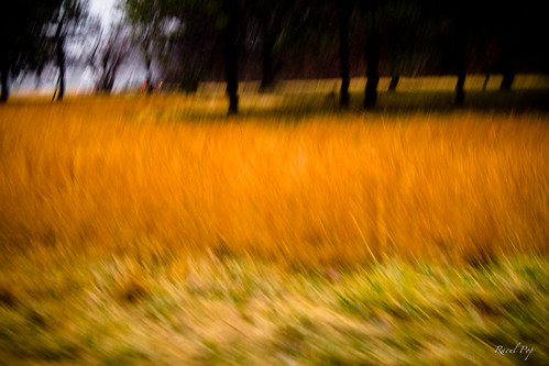 trees canon virginia flickr unitedstates meadow rainy shrubs mclean smugmug movementblur googlephotos canoneos30d