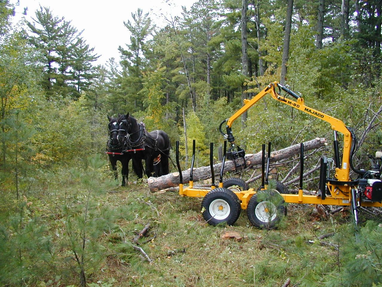 Horse logging and small-scale equipment demo, Grand Rapids ...