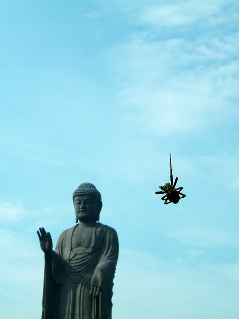 Photo:蜘蛛の糸 By typedow