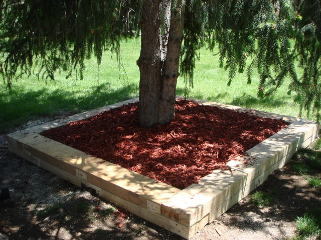 Trees in Planter Boxes Tree Planter Box
