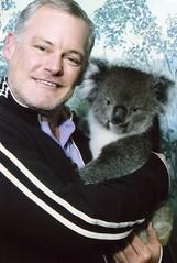 animal, mammal, koala,