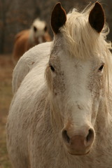 Horses & Horsing