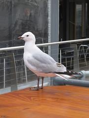 Gull!