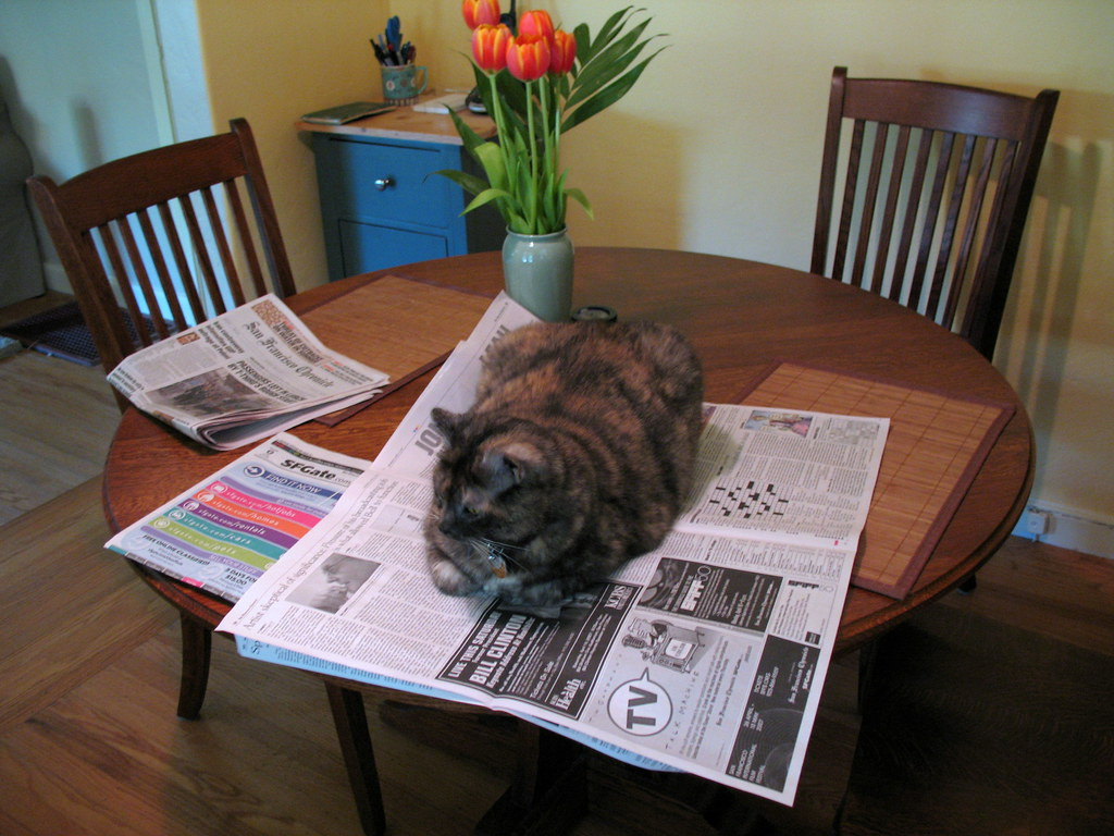 Cat on the newspaper