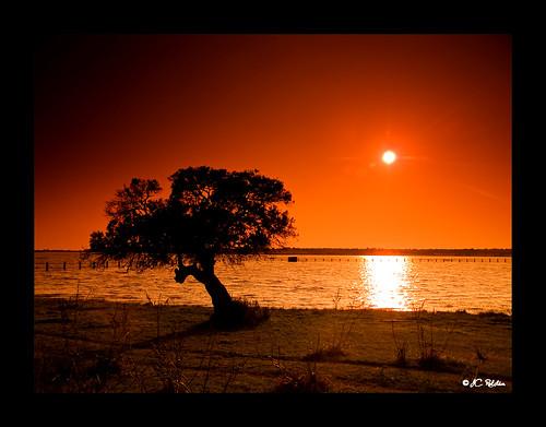 sunset españa silhouette backlight wow contraluz landscape atardecer sevilla spain bravo searchthebest paisaje olympus andalucia soe siluetas cokin e500 zd p121 1454mm jcroldan abigfave colorphotoaward impressedbeauty p124 wowiekazowie
