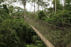 garden(0.0), track(0.0), woodland(1.0), rainforest(1.0), suspension bridge(1.0), canopy walkway(1.0), forest(1.0), rope bridge(1.0), natural environment(1.0), jungle(1.0), bridge(1.0),