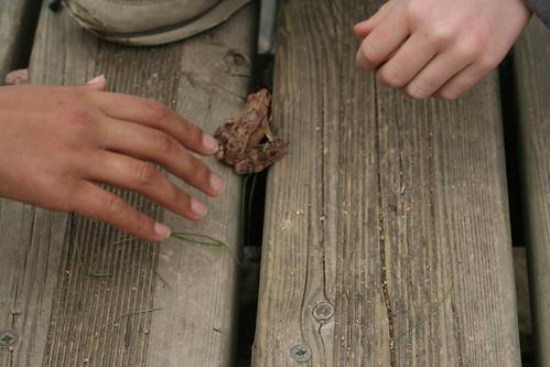 La libération de la grenouille